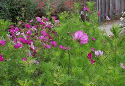 Cosmos Flowers on True False Paths  Lecture Eight  Potential Aberrations In