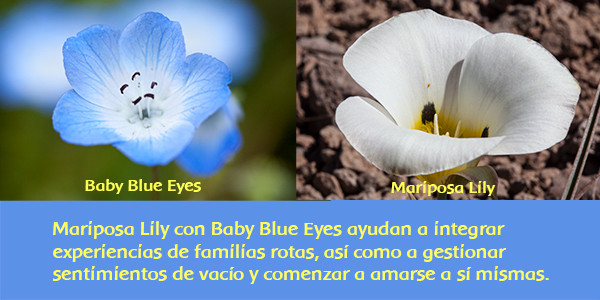 Baby Blue Eyes and Mariposa Lily