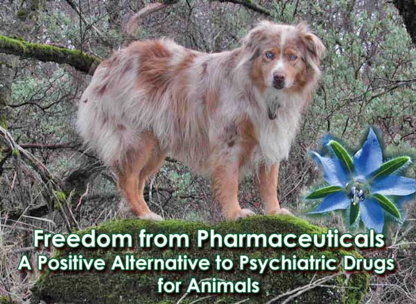 A Positive Alternative to Psychiatric Drugs for Animals