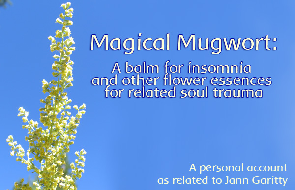 Using Mugwort for Sleep Issues