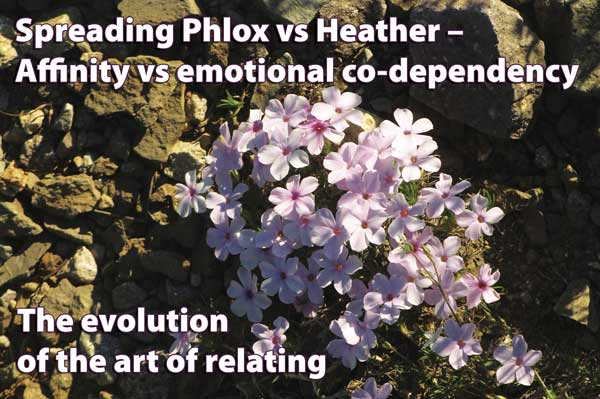 spreading phlox vs heather  affinity vs emotional codependency, Natural flower